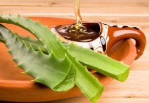 Алоэ с медом – эффективное народное средство для лечения воспаления миндалин