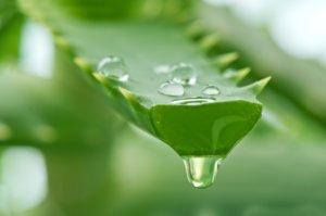 Перед применением сок алоэ нужно обязательно разбавлять водой