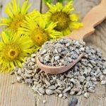 Девясил широко используют в народной медицине, так как он обладает целым рядом лечебных свойств