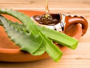 Алоэ и мед - эффективное средство для лечения кашля