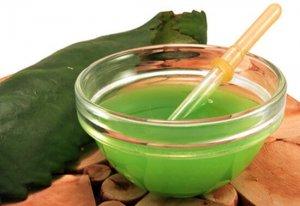 Сок каланхоэ – эффективное средство народной медицины для лечения насморка у детей и взрослых