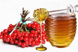 Калина с медом – эффективное народное средство от тиннитуса