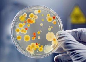 Бакпосев из носа – эффективная диагностика стафилококковой инфекции