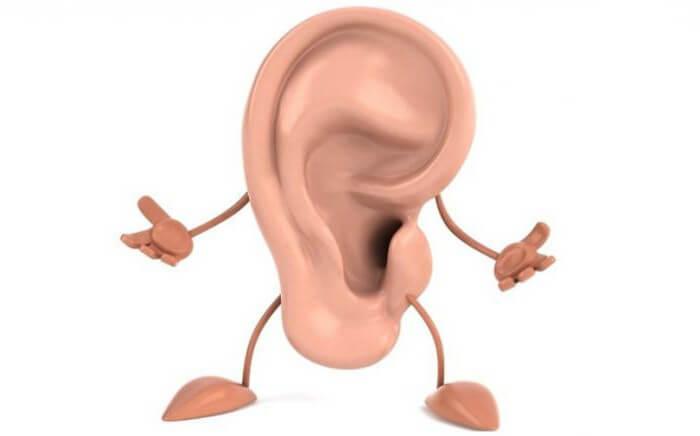 Строение и функции уха человека
