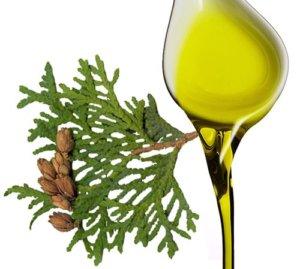 Масло туи используется как вспомогательное средство в терапии полипоза
