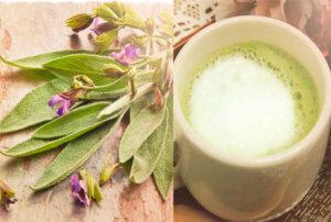 Шалфей с молоком рекомендуется пить при приступах сильного кашля