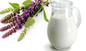 Чаще всего шалфей с молоком используют для лечения сухого кашля