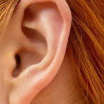 Особенности строения уха